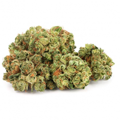 Daily Special - Sativa - 15g