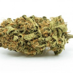 Redecan - Outlaw
