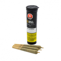 Marley Natural - Gold Island Sweet Skunk Pre Roll - 3 x 0.5g