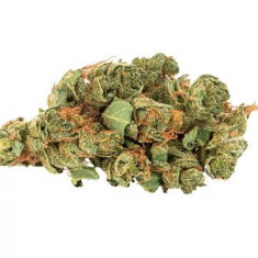 Daily Special - Sativa