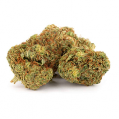 Daily Special - Indica - 15g